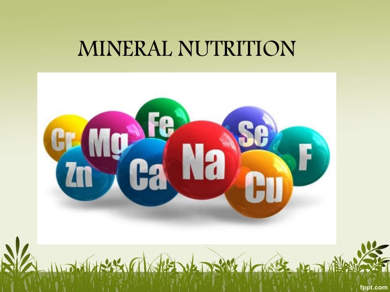 Mineral Nutrients